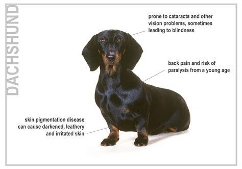 purebred golden retriever health problems health risks for seven top breeds canna pet 174