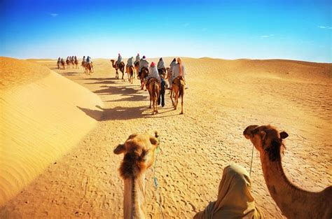 5 Safari Stuff To See by The 10 Best Things To Do In Dubai 2018 With Photos