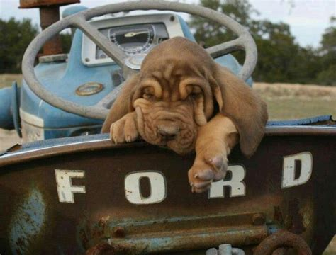 Classic Car Wallpaper Setter by 116 Best Dogs Trucks Images On Autos