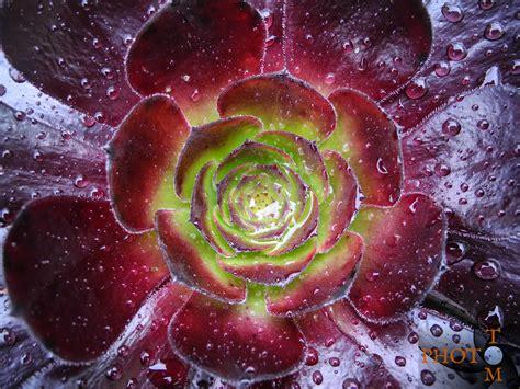 blumen pflanzen pflanzen tomphoto ch