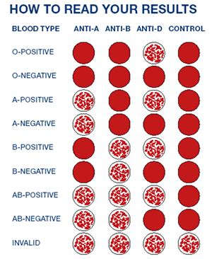 Blood Typing Blood Type Pictures
