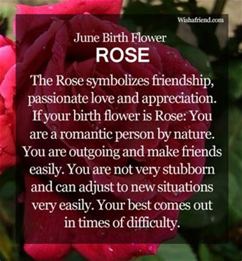 born june meaning image gallery june flower meaning