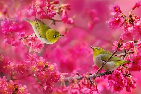 most beautiful colors 30 cute bird pictures with most beautiful colors