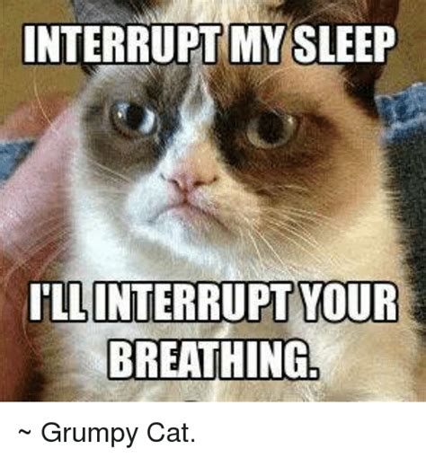 Grumpy Cat Sleep Meme - funny grumpy cat and sleeping memes of 2016 on sizzle