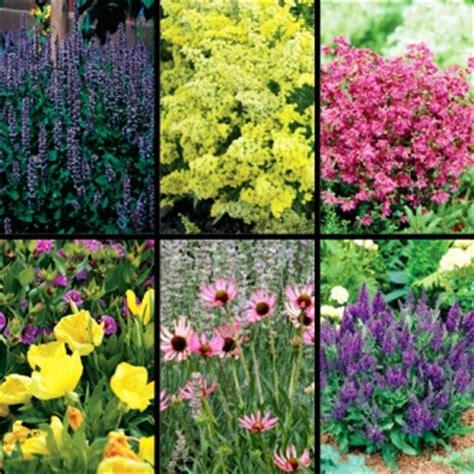late blooming perennials summer flower all summer flowering perennials