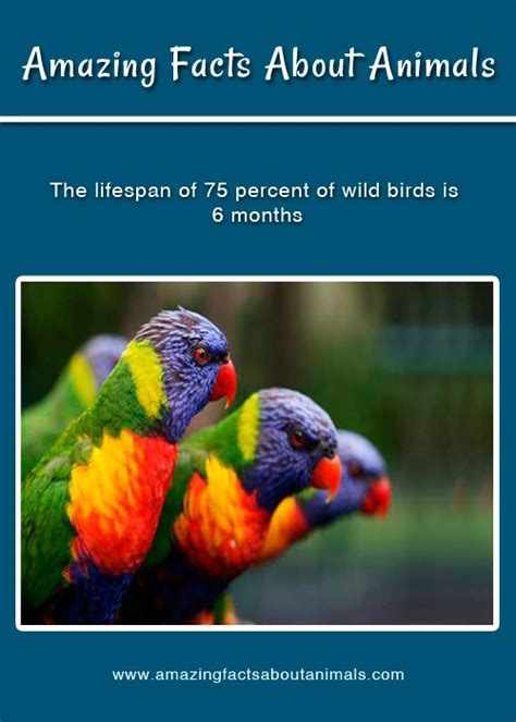 1000 images about amazing facts about animals on
