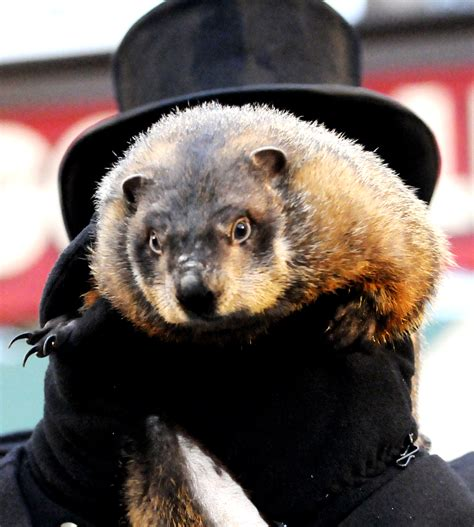 groundhog day quotes prognosticator snapshot punxsutawney phil pittsburgh post gazette