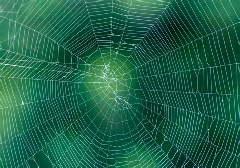 web on spider web on abstract blur green background pattern