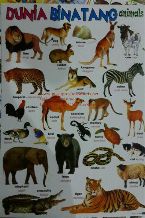 tokopedia hewan jual poster edukasi hewan pusatgrosiracc tokopedia