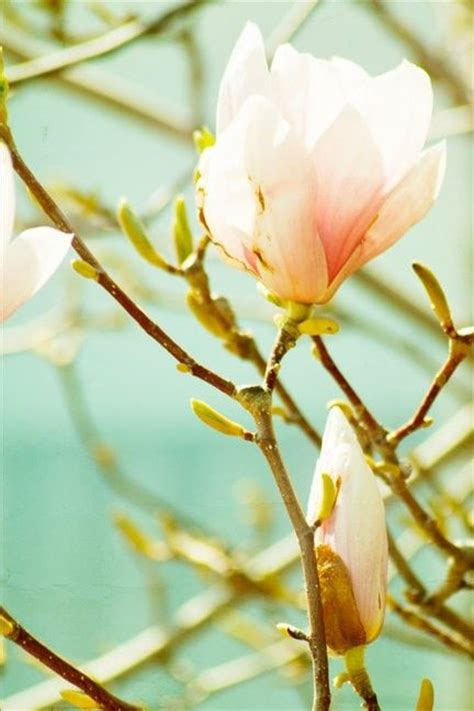 magnolia things to paint