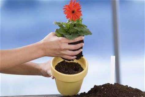 what soil to buy for vegetable garden should i buy topsoil or potting soil for my flower