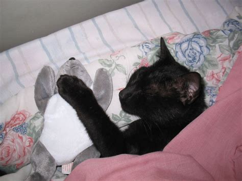 Meaning Of Black Cat At Your Door by Image Black Cat Sleeping