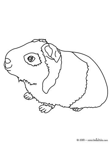 Guinea Pig Coloring Pages Hellokids Com Guinea Pig Colouring Pages