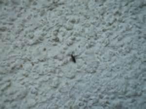kleine weiße fliegen im garten schlafzimmer kleine tiere im schlafzimmer kleine tiere