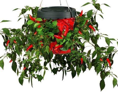 Topsy Turvy Pepper Planter pepper micro gardening the topsy turvy pepper planter pepperscale