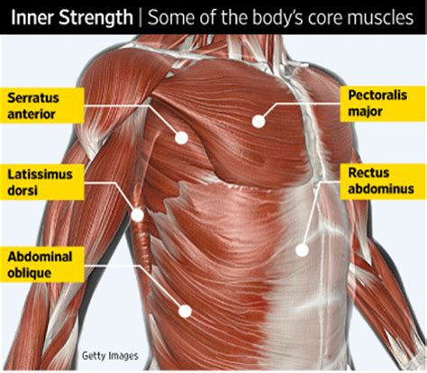 what does the bench press work health journal why core strength workouts work wsj