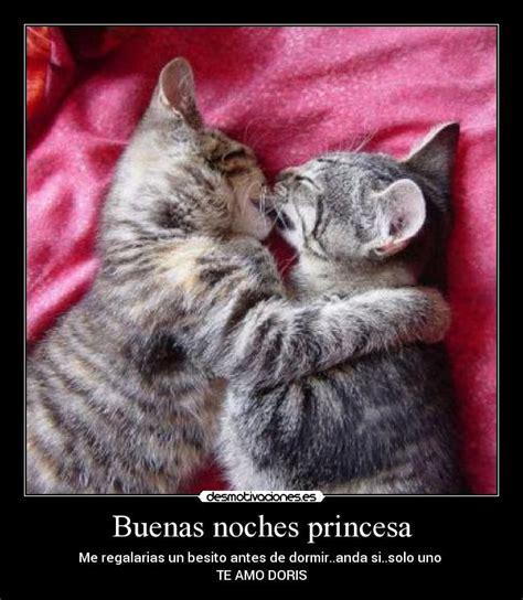 imagenes buenas noches con gatos buenas noches princesa desmotivaciones