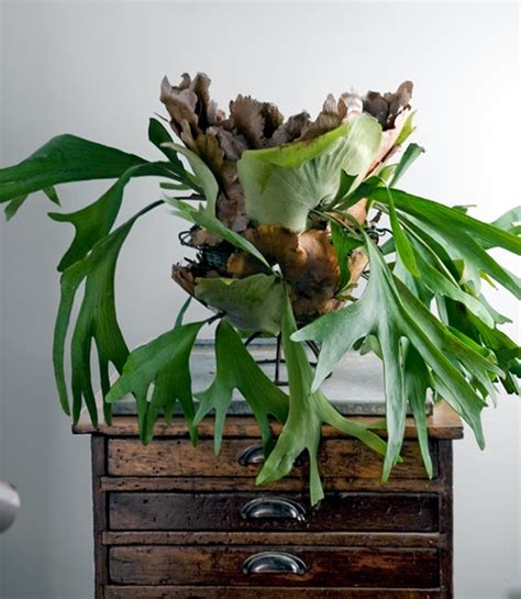 unusual houseplants plants with unusual flowers and emissions of a beautiful