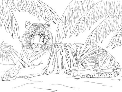indonesian animals coloring pages 115 best images about bahasa indonesia resources on