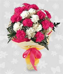 flowers for delivery 1 dozen pink and white carnations