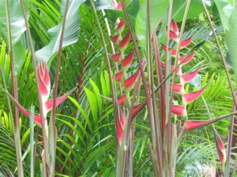 list of tropical plants tropical plants at hawaiian botanicals