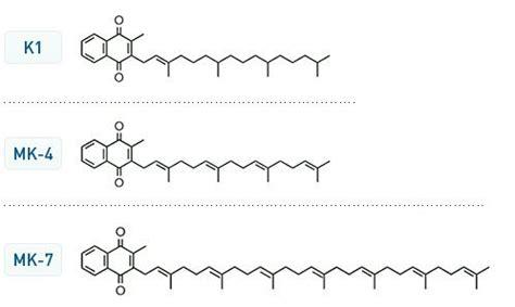 contenuto vitamina k negli alimenti il contenuto di menaquinone la vitamina k2 nei prodotti