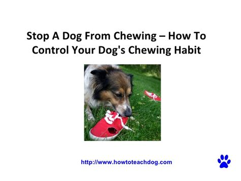 how to get a puppy to stop chewing stop a from chewing how to your s chewing habit