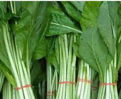 Pasaran Teh Hijau Thailand griya hidroponikku manfaat sawi hijau