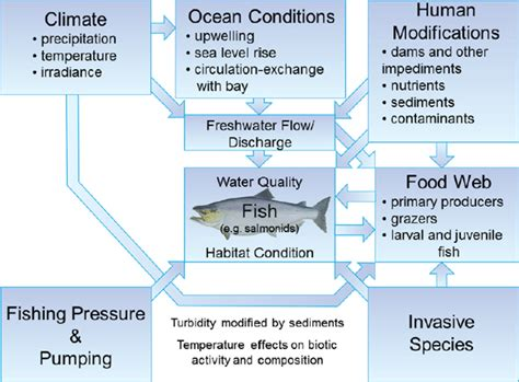 changes in cloud distribution explain some weather what factors can affect river species diversity socratic