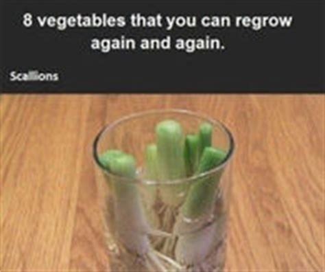 8 vegetables you can regrow vegetables pictures photos images and pics for