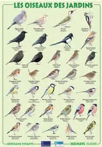 comptage des oiseaux de nos jardins