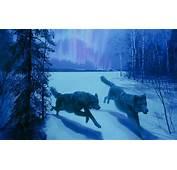 Aurora Pictures Backgrounds  HD Desktop Wallpapers 4k
