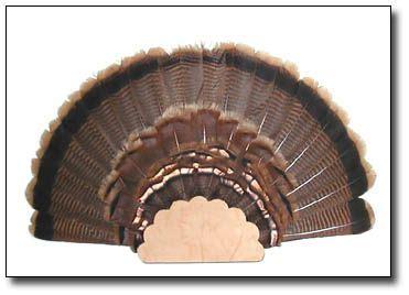 turkey fan mount template turkey fan mount template choice image template design ideas