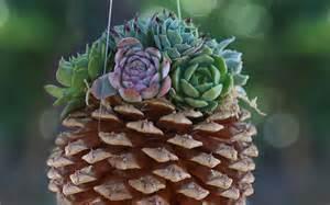 15 unique and creative succulent planter ideas garden lovers club