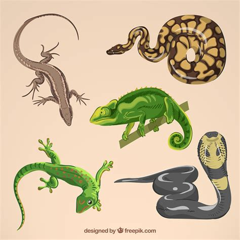 reptile vectors photos and psd files free download