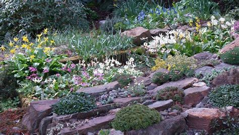 Scottish Rock Garden with Scottish Rock Garden Club Gt Bulb Log Gardens Pinterest