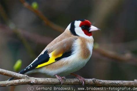 Heimische Vögel Im Winter 4708 by Heimische V 195 182 Gel Heimische V Gel Einebinsenweisheit