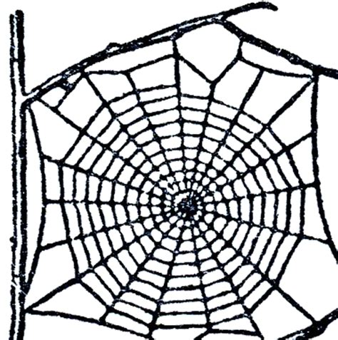 pattern free web clipart spider web pattern clipartxtras