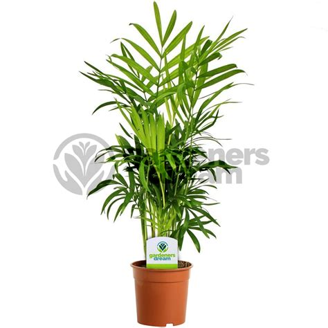 in door plants pot three four plants argements video gardenersdream indoor plant mix 3 plants house