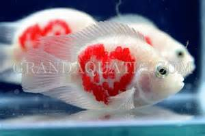 Freshwater tropical fish supply and aquatic plants from Thailand