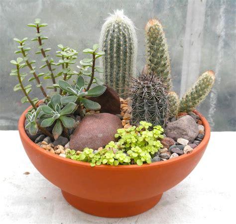 cactus garden indoor plants  lexington ky michlers
