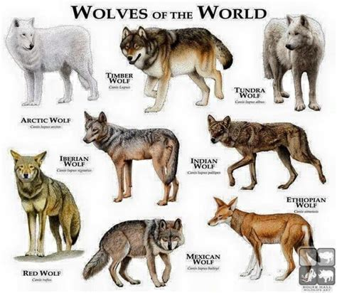 elizabeth s wolf a novel of the breeds the voyager all types of wolves around the planet