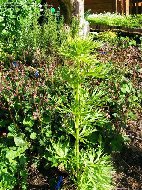plant identification closed herbmedicinal plant