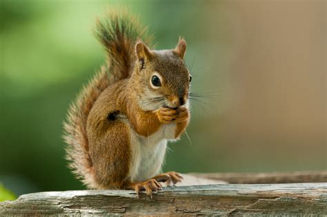 Protect Your Car from Damage Caused by Squirrels Chewing