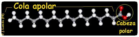 cadena carbonada solubilidad l 205 pidos