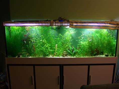 led beleuchtung aquarium erfahrungen led leuchte aquarium nv12 hitoiro
