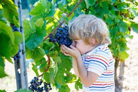 calorie uva da tavola alimentazione per bambini uva