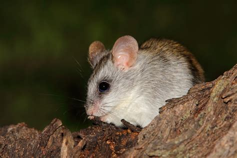 Be To Animals facts about nocturnal animals that ll keep you awake at