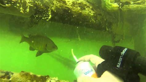 blue dive scuba diving blue lake