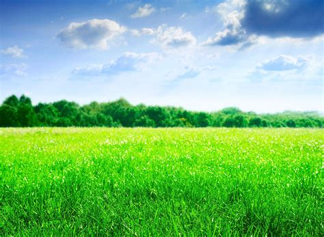 green field tablet wallpapers  backgrounds tablet